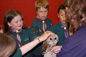 North Wales Bird Trust_3