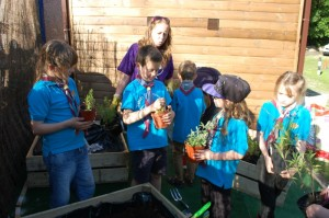 Beavers_Purple_Gardener_Activity_Badge_3