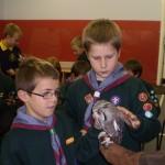 Turbary Owls