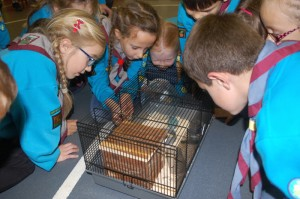 Beavers (Purple) Animal Show & Tell_4